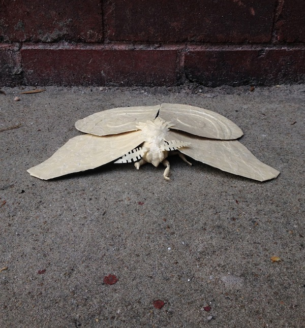 Masking Tape Moth by Jamie Bourgeois