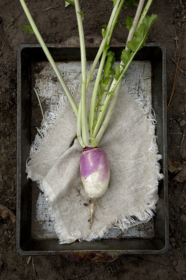 Turnips, Vegetables, Libbie Summers