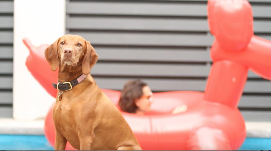 Balloon Dog, Vizsla, Dog Treats