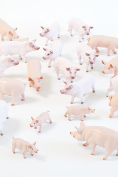 Plastic Farm Animals, Pigs, Farm Animal Toys